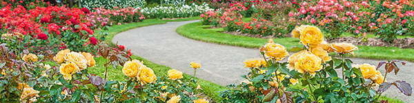 international rose gardens